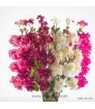 گل دیانتوس مصنوعی